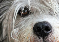 6 Ways to Honor Your Dog Who Passed Away