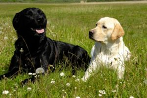 Hip Dysplasia and Your Dog