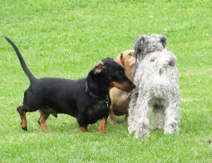Getting a Second Dog - 4 Tips