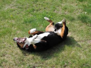 dogs lying on their backs