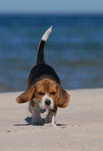 summer dog essentials - what to bring along for fun in the sun